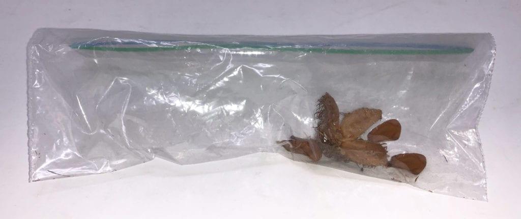 Beech Nut in Bag