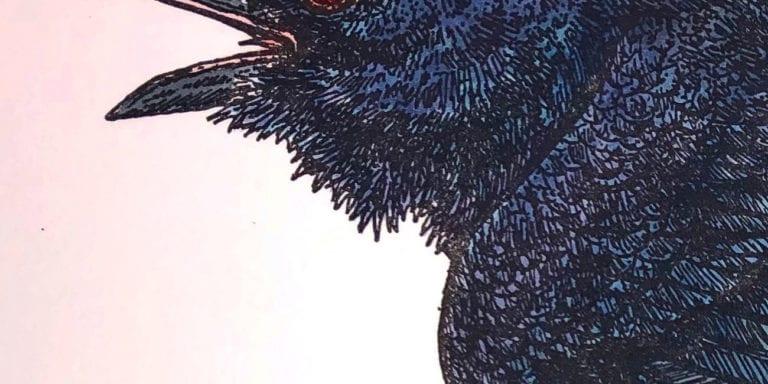 Raven Close-up
