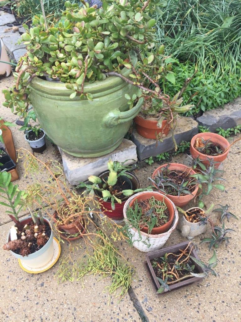 Bonnie Vee's Plants