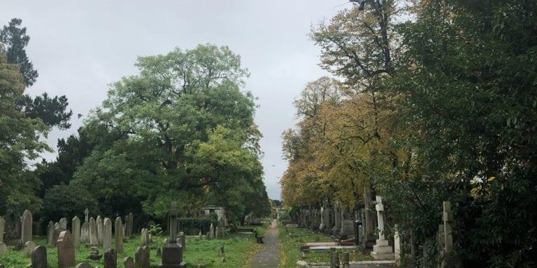 Graveyard Ravens Flying