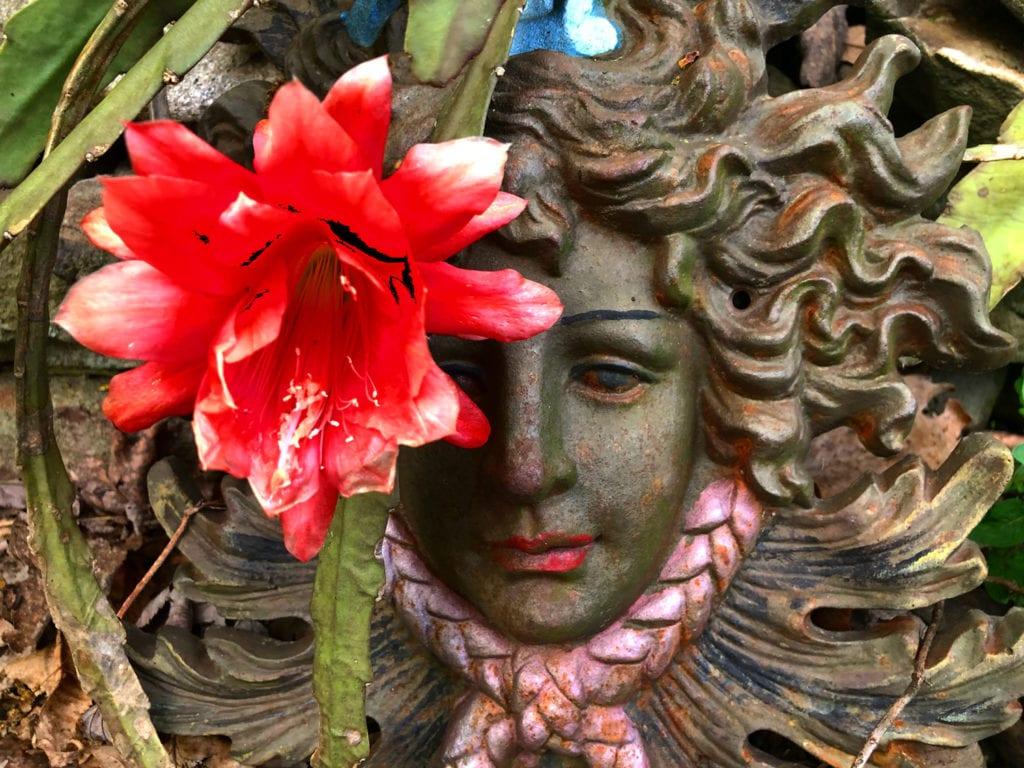 Barbara's Cactus Flower