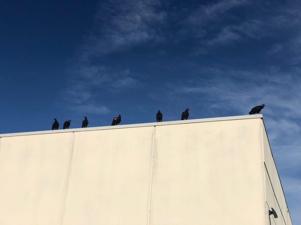 Congress of Vultures