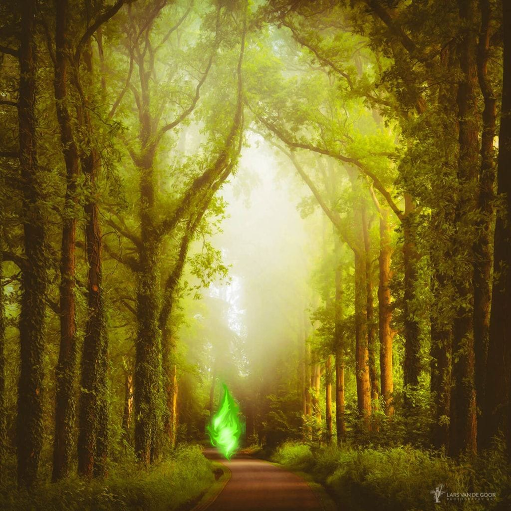 Green Flame in the Forest