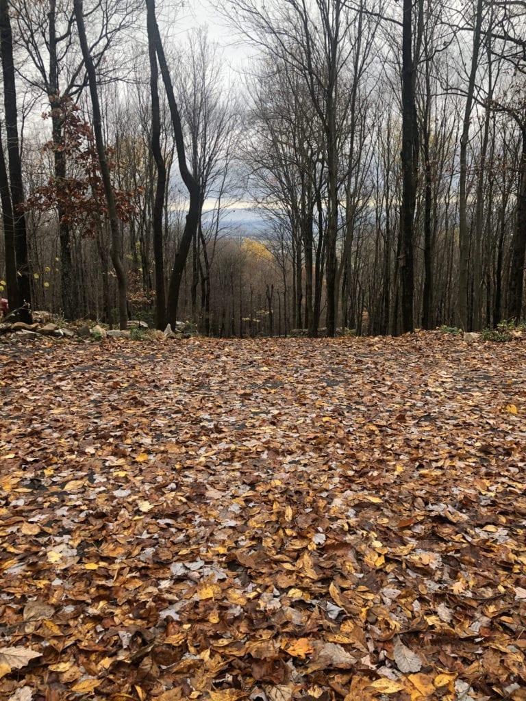Leafy Driveway
