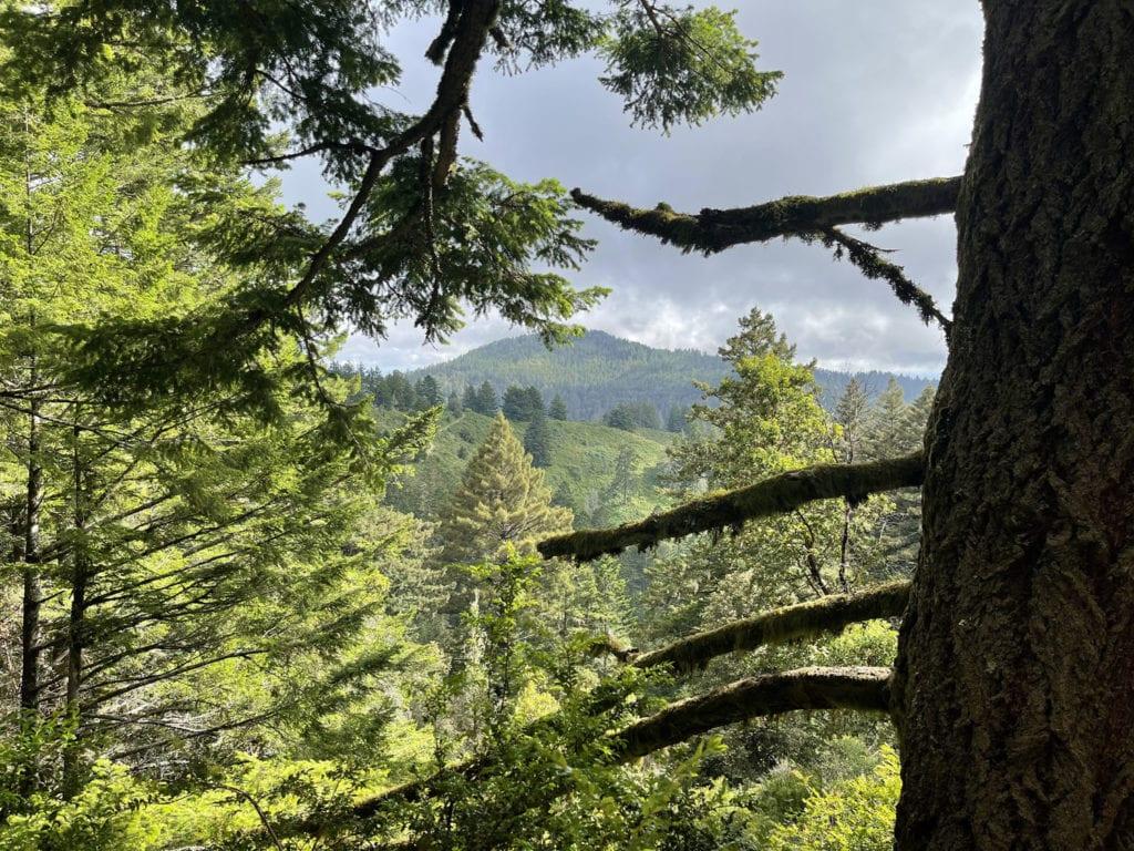 Redwood View