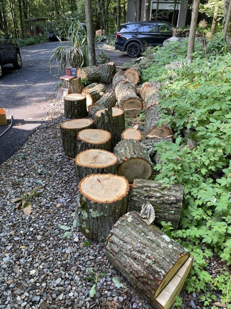 Cut Up Oak