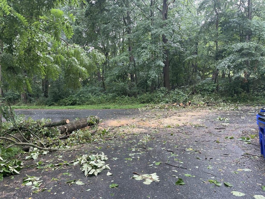 Cleared Poplar