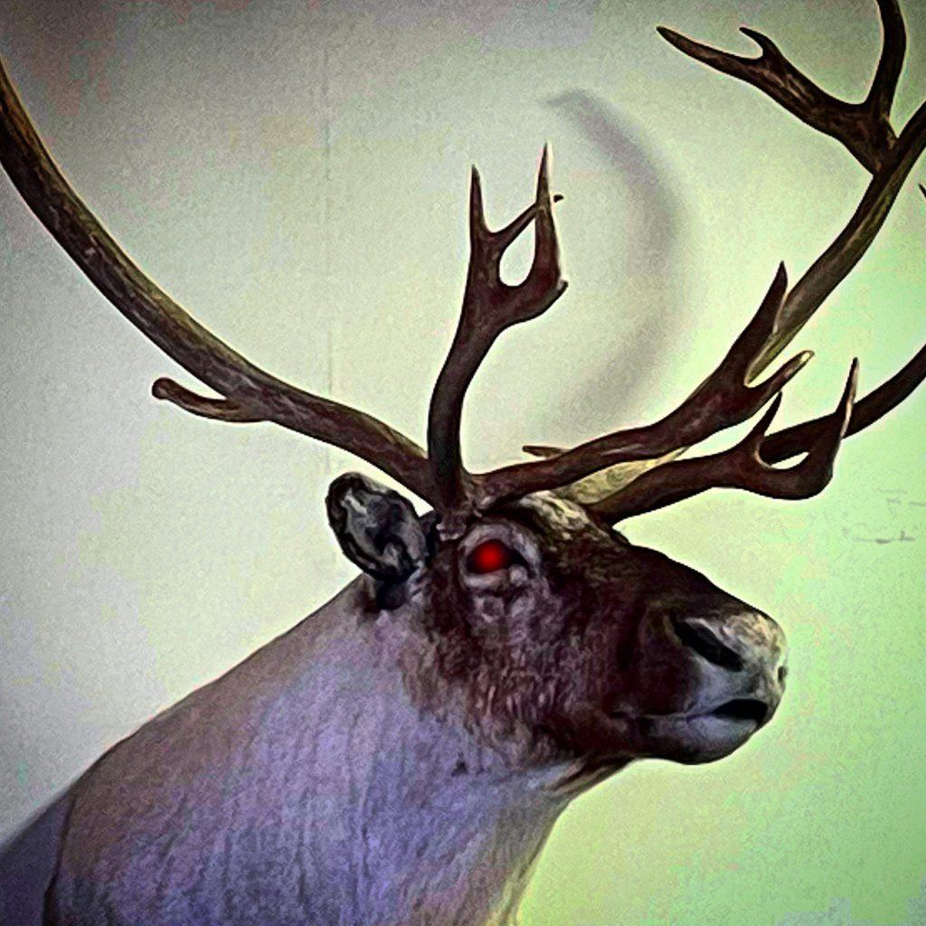 Red-Eyed Animal